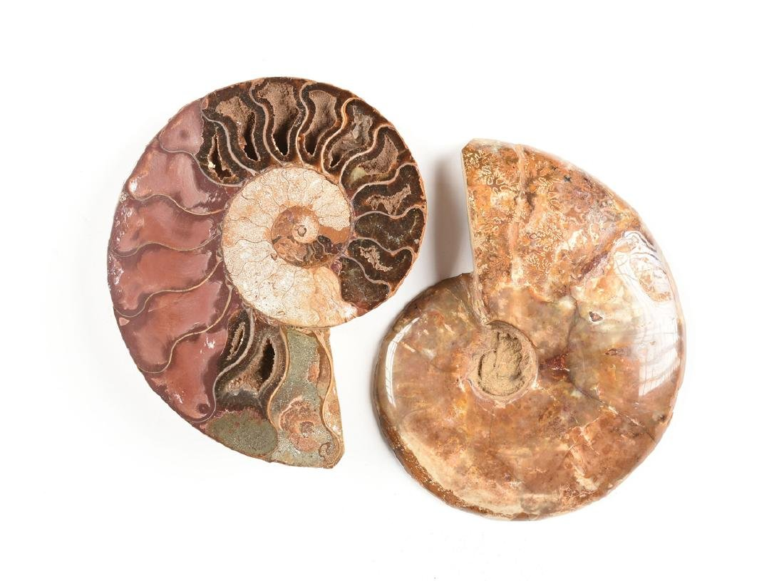 A GROUP OF THREE GRADUATED BISECTED POLISHED AMMONITE - 7