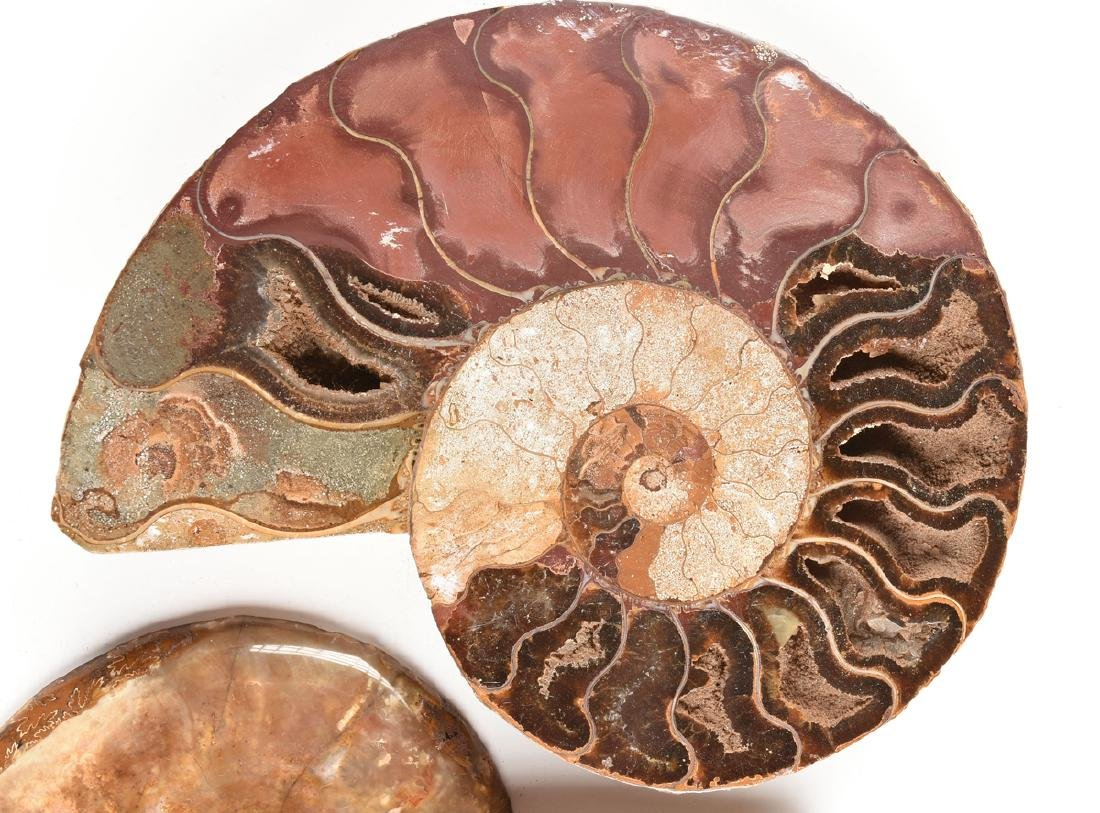 A GROUP OF THREE GRADUATED BISECTED POLISHED AMMONITE - 9