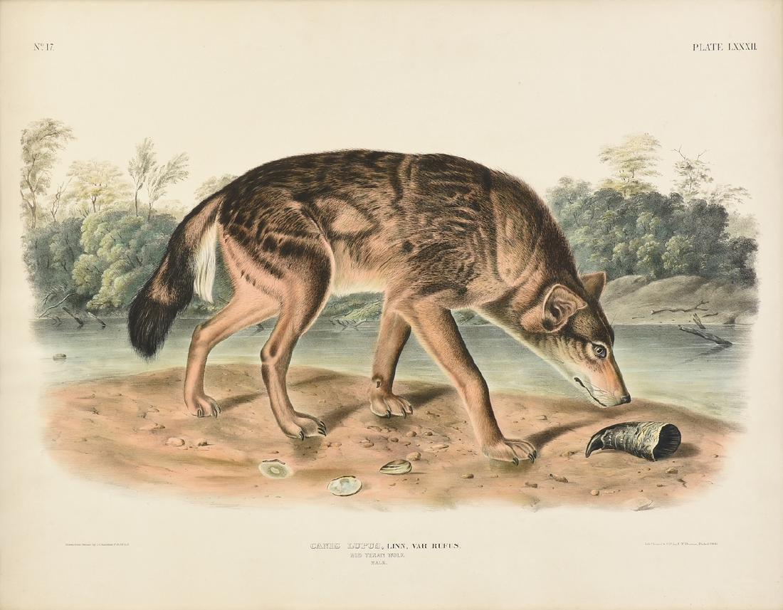JOHN JAMES LAFOREST AUDUBON (French/American 1785-1851)