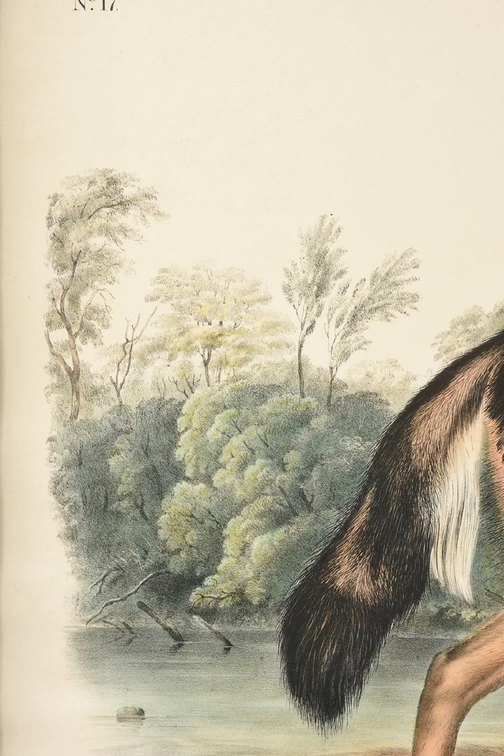 JOHN JAMES LAFOREST AUDUBON (French/American 1785-1851) - 7