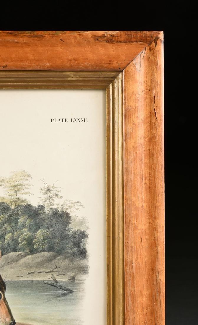 JOHN JAMES LAFOREST AUDUBON (French/American 1785-1851) - 8