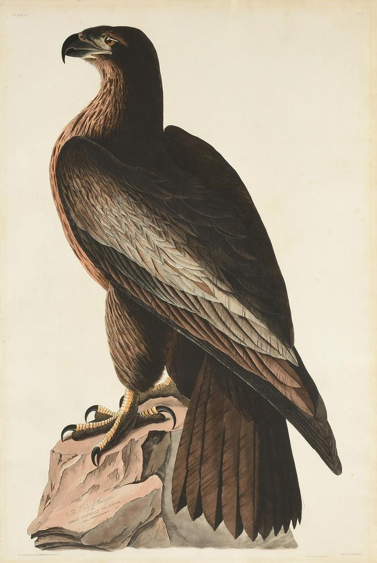 after JOHN JAMES AUDUBON (American 1785-1851) AN