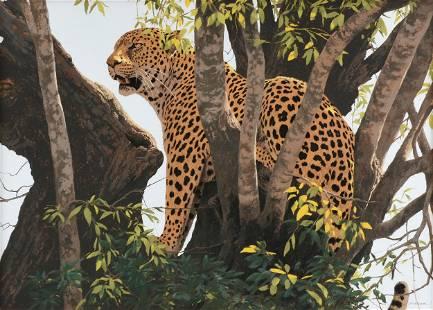 "KIM DONALDSON (Zimbabwean b. 1952) A DRAWING, ""Leopard"