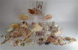 Large Collection of Sea Shell  Sea Urchin Display