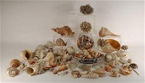 Large Collection of Sea Shells and Corals
