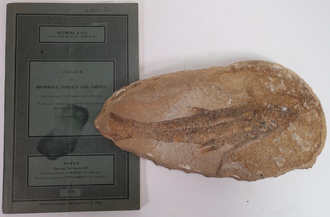 6  Fish Fossils in Matrix - 5