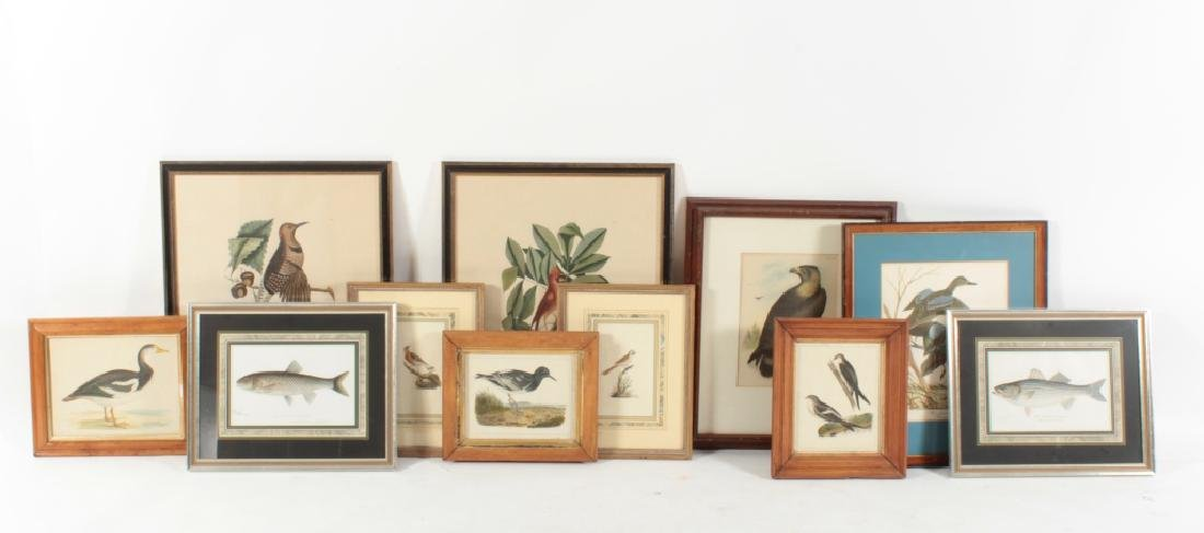 11 Framed Antique and Decorative Bird/Fish Prints