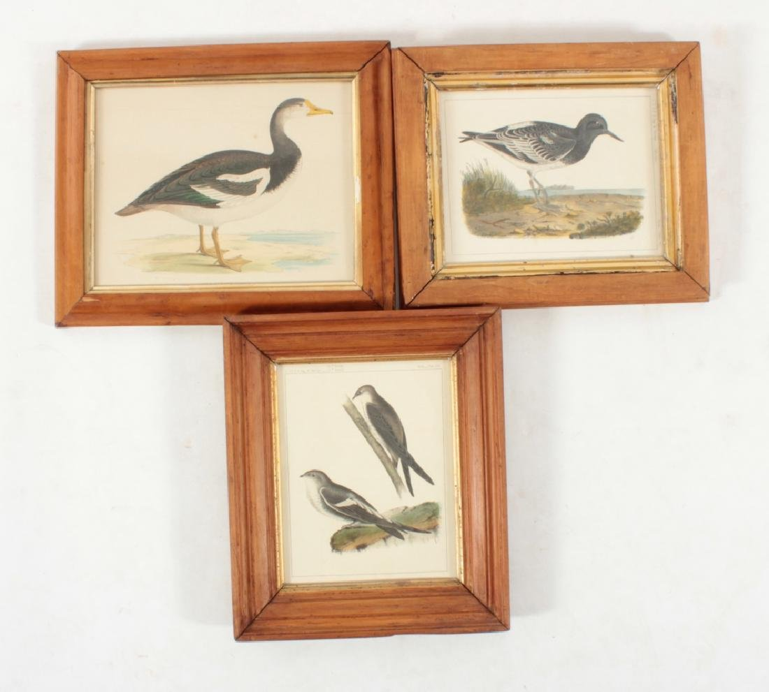 11 Framed Antique and Decorative Bird/Fish Prints - 3