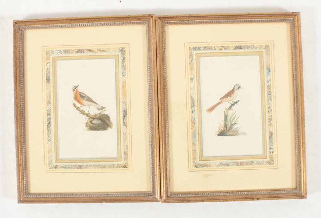 11 Framed Antique and Decorative Bird/Fish Prints - 4