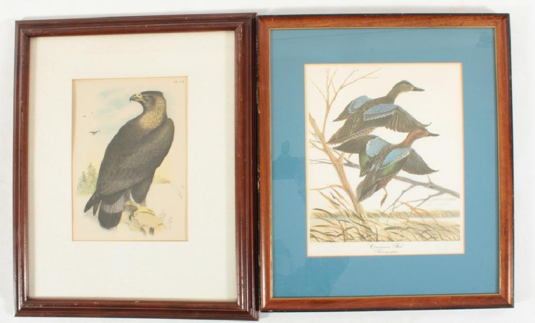 11 Framed Antique and Decorative Bird/Fish Prints - 5