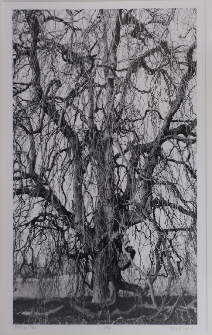 5 Cali Gorevic, Photograph Giclee Prints, 20th c. - 3