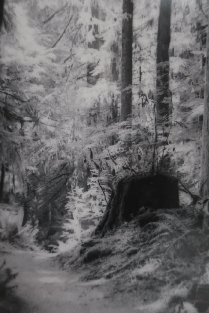 5 Cali Gorevic, Photograph Giclee Prints, 20th c. - 7