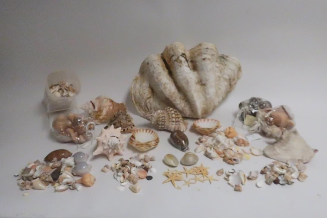 Large Clamshell and Seashells with basket