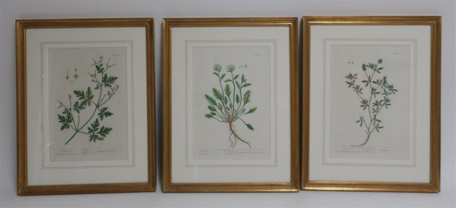 3 Botanical Handcolored Engraving Prints