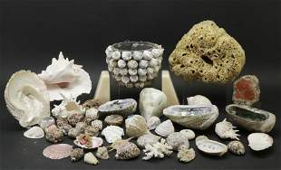Large Collection of Shells & Stones with Basket
