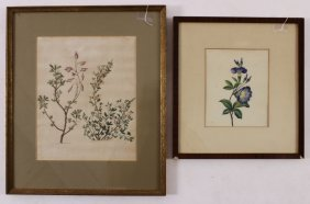 2 Botanical Watercolors, one initialed