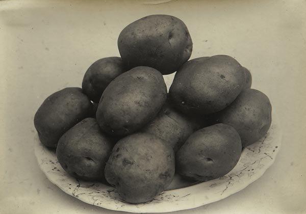 64:  CHARLES  JONES  1866-1959  Potatoes, circa 1900  G