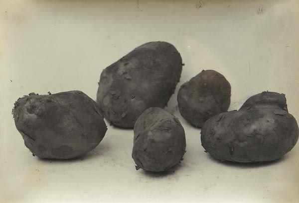 65: 65:  CHARLES  JONES  1866-1959  Potatoes Unsuitable