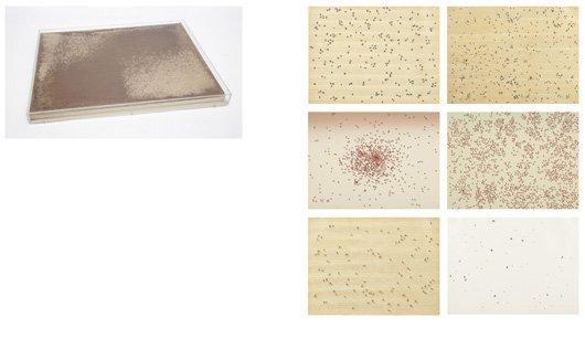 1010: ED RUSCHA, b. 1937 Insects Portfolio, 1972 The co