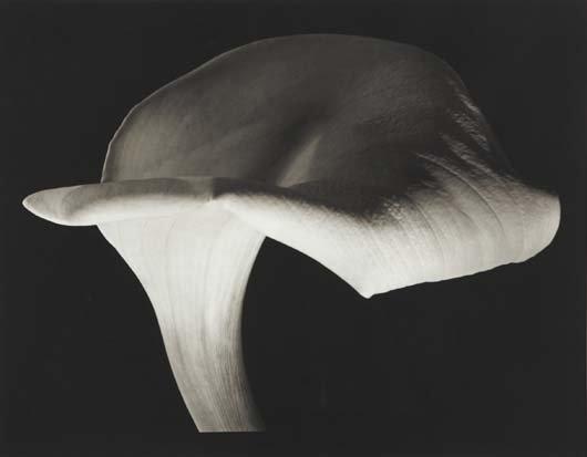 1023: HORST P. HORST, 1906-1999 Calla Lily, 1944 Platin