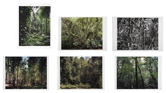 2012: THOMAS STRUTH, b. 1954 Paradies Portfolio, 2004 T