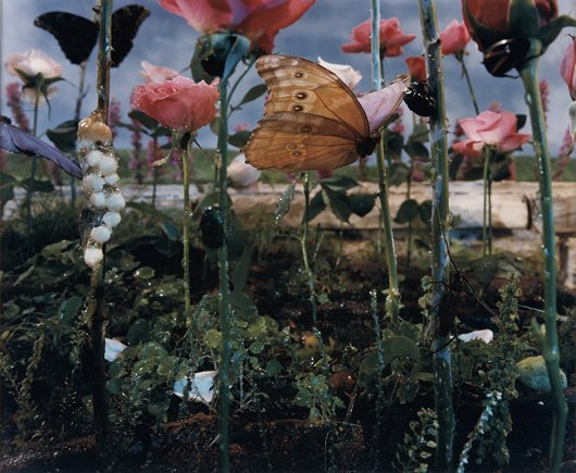 110: GREGORY CREWDSON, Untitled (butterflies and ball o