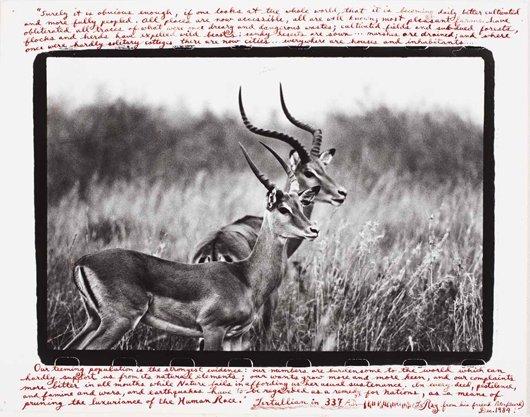 20: PETER BEARD, Antelopes, 1984