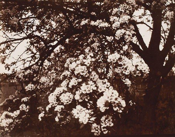 2:  EUGÈNE  ATGET  (French, 1857-1927)  POIRIER