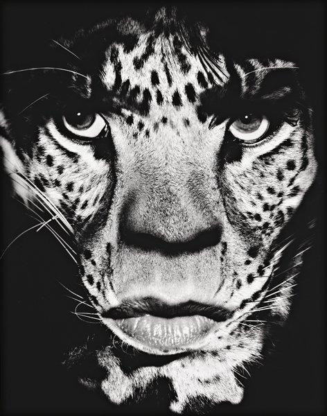 9: ALBERT WATSON, Mick Jagger, Los Angeles, 1992