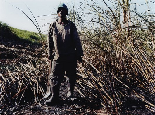 3: ZWELETHU MTHETHWA, Untitled from Sugar Cane Series,