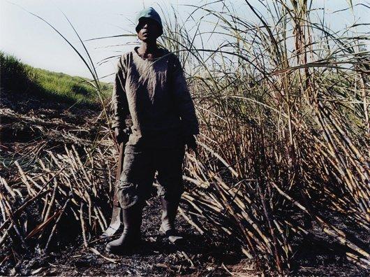 3: ZWELETHU MTHETHWA, Untitled from Sugar Cane Series,