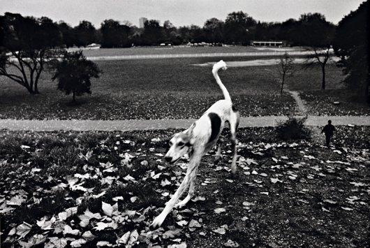 4: JOSEF KOUDELKA, England, Dog