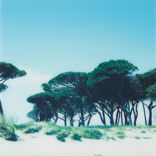 9: Elisabeth Montagnier? [Beach and Trees from the Ocea