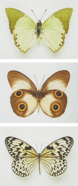 10: Elisabeth Montagnier? [Butterfly Specimens in Green
