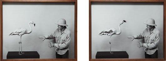 2: Elad Lassry, Travis Parker and Chilean Flamingo, 900
