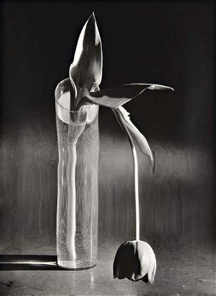 32: ANDRÉ KERTÉSZ Melancholic tulip, 1939