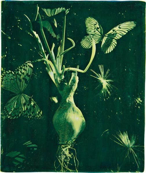 """15: OBERTO GILI, """"Spring Onion With Butterflies and Art"""