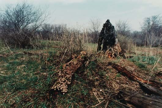46: ANA MENDIETA, Untitled (Silueta Series, Iowa), 1976