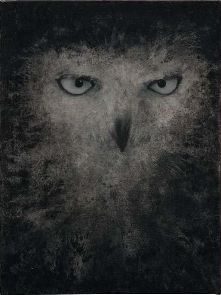8: DAVID NOONAN, Snowy Owl, 2003