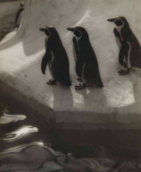 27: ELEANOR PARKE CUSTIS, Penguins Three, 1939