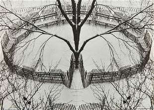 202: ANDRÉ KERTÉSZ, A Winter Garden, New York, 1970