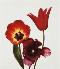 IRVING PENN, Three Tulips (Red Shine, Black Parrot,