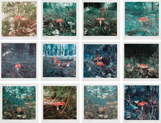 CARSTEN HÖLLER, Mushroom, 2004