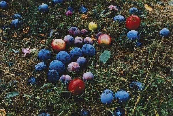54:  WOLFGANG  TILLMANS  (b. 1968)  Windfall.  Color ph