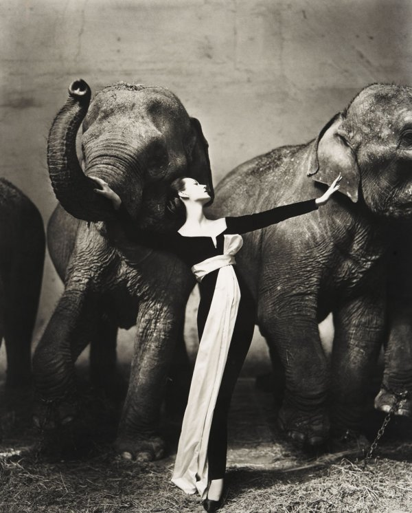 172:  RICHARD  AVEDON  1923-2004  Dovima with Elephants