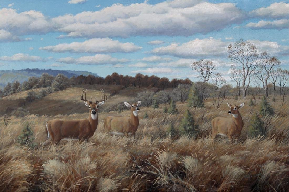 Marcel Bordei, Afternoon watch (White Tailed Deer), Oil