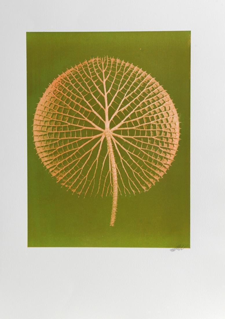 Jonathan Singer, Giant Orange Amazon Waterlily on
