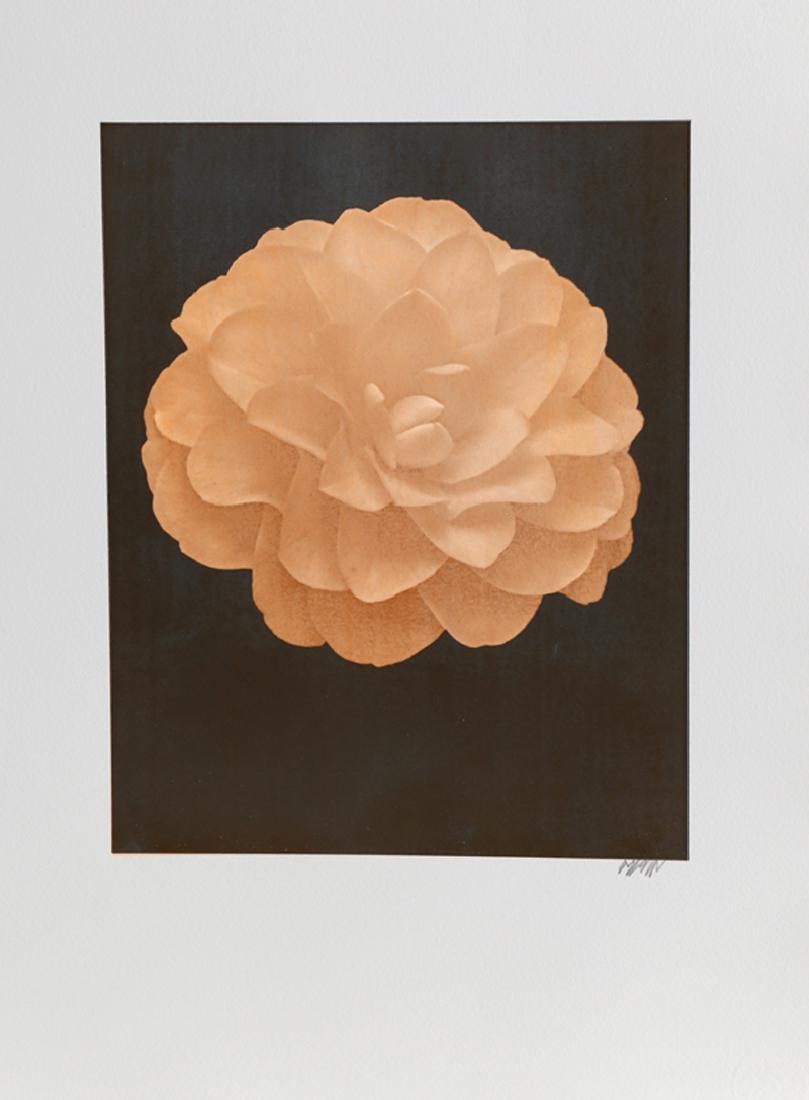 Jonathan Singer, White Dahlia (Orange) on Black,