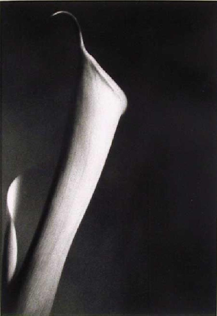 John Benigno, Single Cala, Gelatin Silver Print