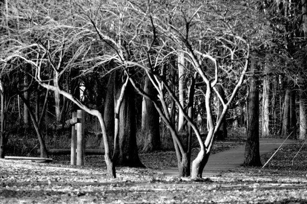17: Mickey Frome, Bare Winter Woods, Photograph